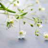 FAQ 03 – Homeopathy is gentle and natural – why should it do any harm?